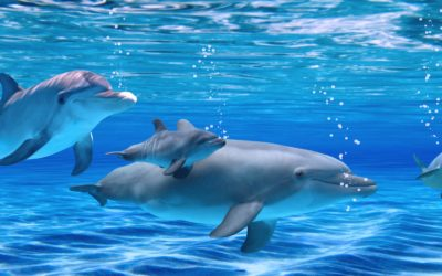 La communication avec les dauphins, une expérience inoubliable