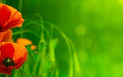 Soigner les allergies avec des remèdes naturels