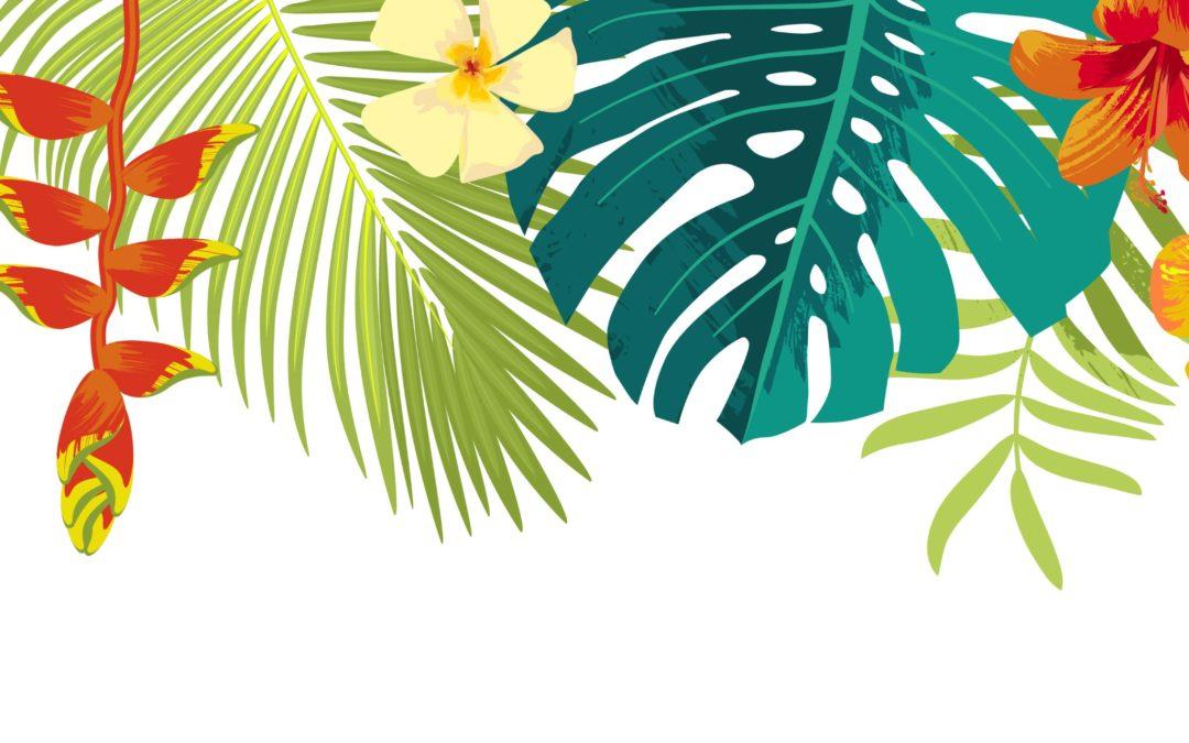 De Aloha à Ho'oponopono Nouveau