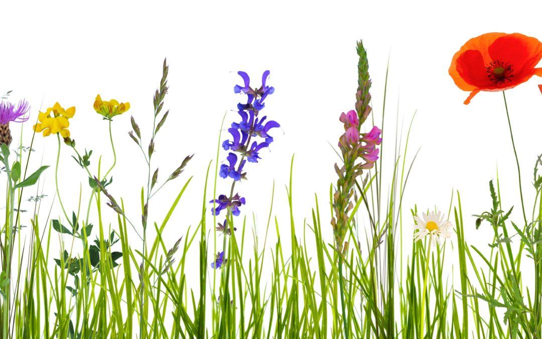 Des plantes contre la dépression
