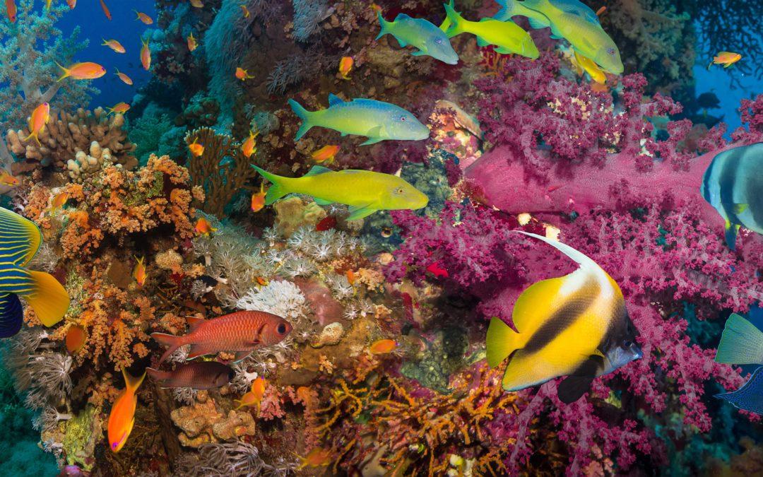 Les poissons perçoivent les pensées humaines