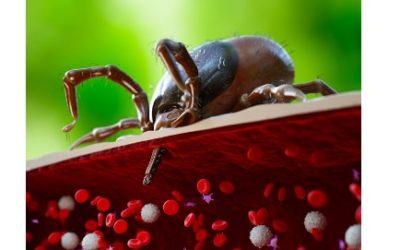 La maladie de Lyme, une maladie difficile