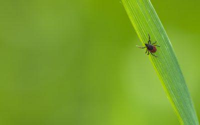 Les traitements conventionnels contre la maladie de Lyme
