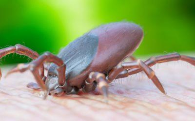 Les différents stades de la maladie de Lyme