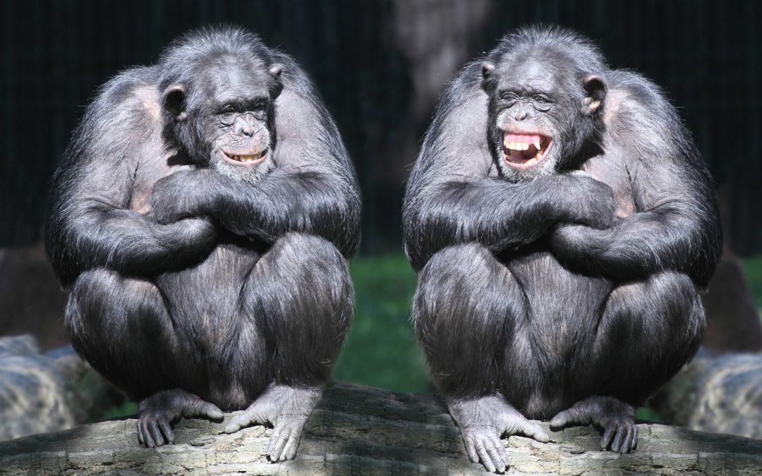 La coopération dans l'évolution