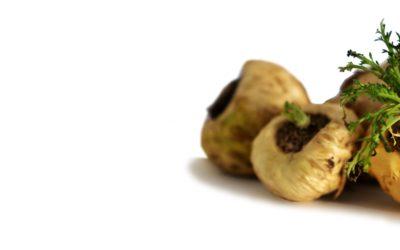La maca, une plante inoubliable