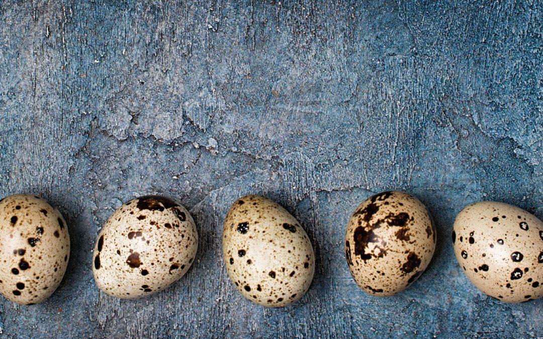 Les œufs de caille contre l'allergie
