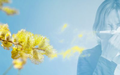 Les traitements naturels contre la rhinite allergique